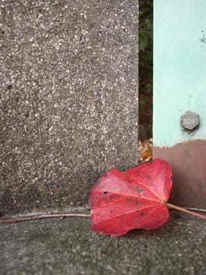 aka-leaf.jpg