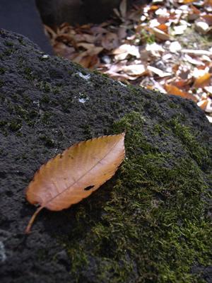 koke-leaf.jpg