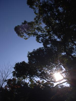 kusu-light.jpg