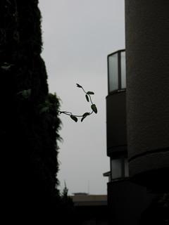tsuru3.jpg